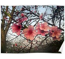 Blooming Pink Poster