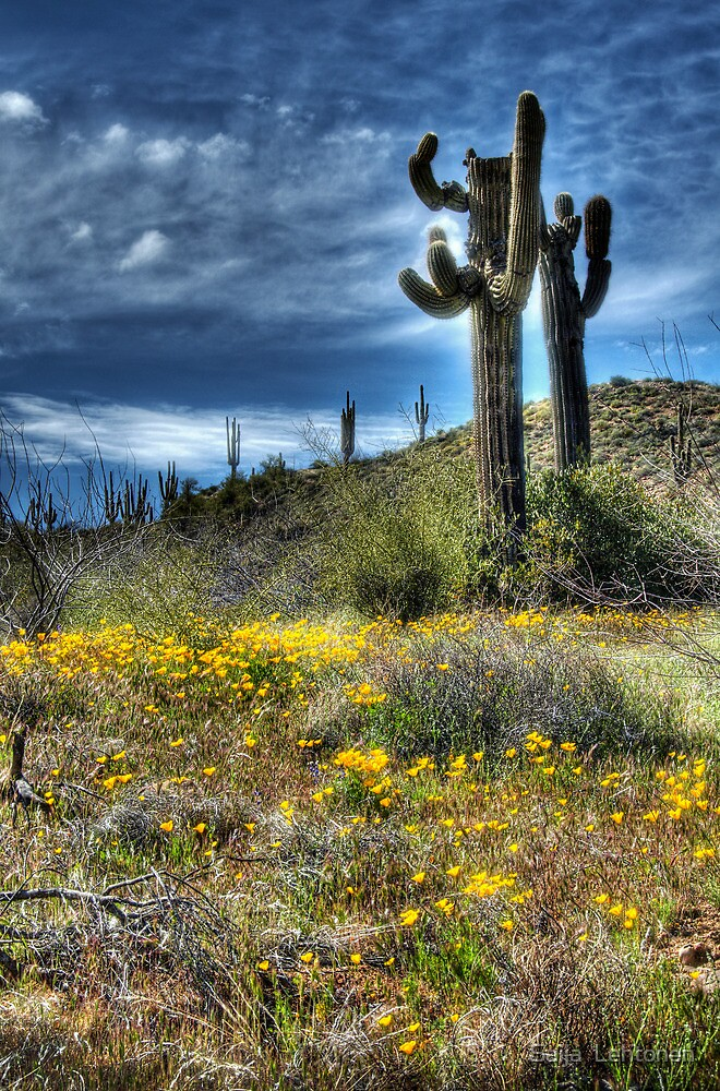 Spring in the Desert  by Saija  Lehtonen