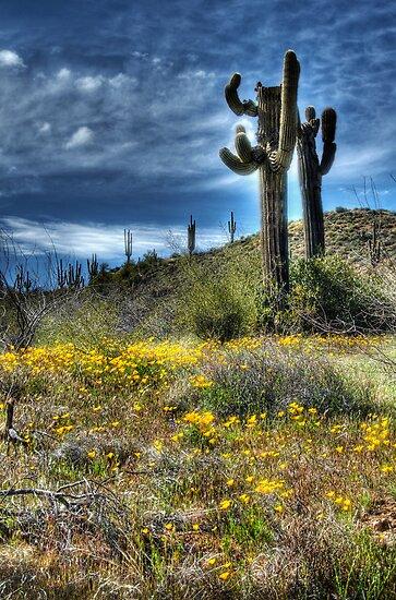Spring in the Desert  by Saija  Lehtonen