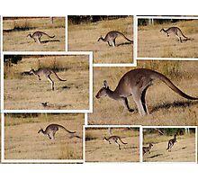 Kangaroos  Hopping Photographic Print