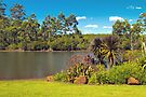 By the Lake at Silkwood by Elaine Teague