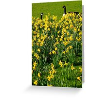 enjoying the view of the daffodils Greeting Card