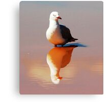Seagull Reflected. Canvas Print