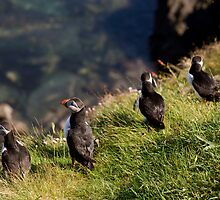 Puffin Gang by Julian Bailey