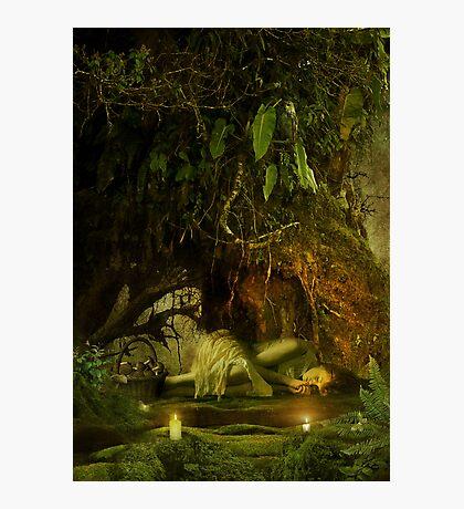 the resting tree Photographic Print