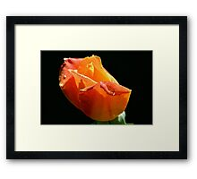 The Garden 22 Framed Print