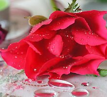 Ribbons and roses by Joyce Knorz