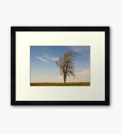 Isolated tree Framed Print