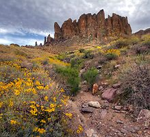 Spring in the Superstitions by Sue  Cullumber