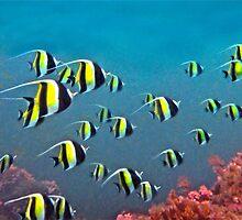 IDOLISE THE OCEAN by NICK COBURN PHILLIPS