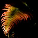 Sunray on a Forest Fern by mamba