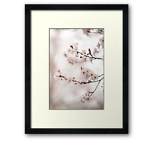 Cherry Plum Blossom Framed Print