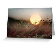 Sun Worshipers Greeting Card