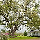 Under the old oak tree  by Bonnie T.  Barry
