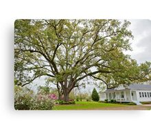 Under the old oak tree  Canvas Print