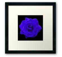 Single Blue Rose. Framed Print