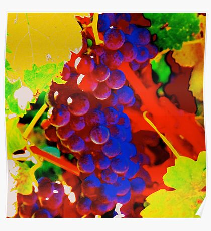 Artistic Grape Vine Poster
