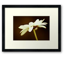 I like daisies with my morning coffee Framed Print