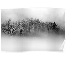Trees and Fog Poster