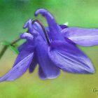 Purple Delight by Anita Pollak