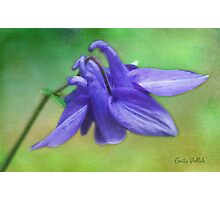 Purple Delight Photographic Print