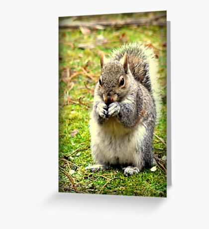 Pretty please can I have a nut. Greeting Card