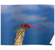 Dragonfly On A Beach Poster