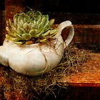 Green Tea by chasingsooz