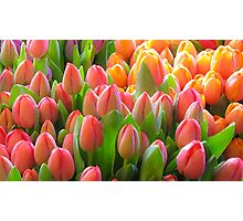 not another tulip shot ... Photographic Print