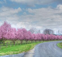 1st Day Of Spring  by James Brotherton