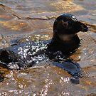 A Quick Dip by Robin Black