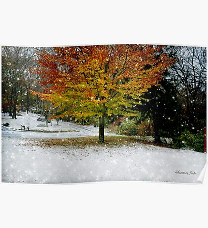 Beech Tree ~ Caught in a Snow Flurry Poster