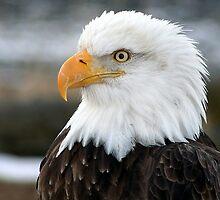 Eagle Portrait by Mike Shero