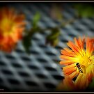 Hover Fly in the Fall by Deb  Badt-Covell