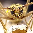 Pollen Count by Cameron Hampton