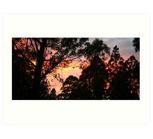 Sunrise in the Dandenongs Art Print
