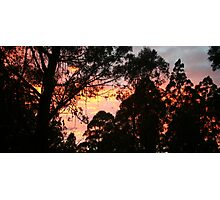 Sunrise in the Dandenongs Photographic Print