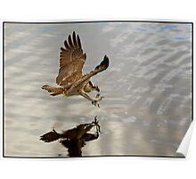 Osprey 410 Poster
