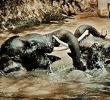 Elephants at Play by Shari Mattox-Sherriff
