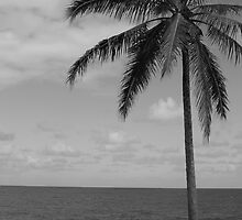 Island Life Is in the Palm by Brandon Beresini