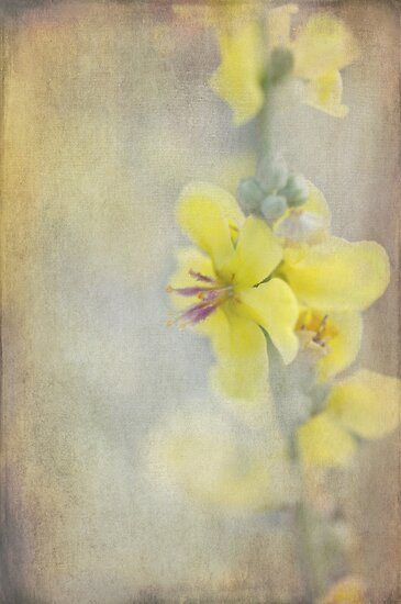 wildflower by Teresa Pople