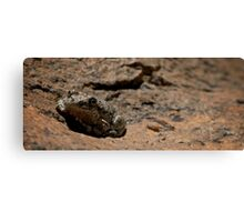 This Frog Blends Canvas Print
