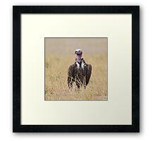 Nubian Vulture Framed Print