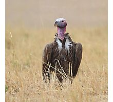 Nubian Vulture Photographic Print