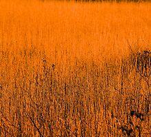 Fields of Grass so Orange by Brandon Beresini