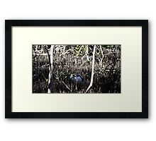 Ibis in the Mangroves Framed Print