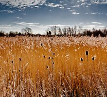 Man is only a reed, the weakest in nature, but he is a thinking reed. by Paul Richards