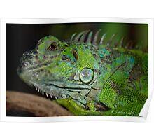 Iggy Iguana  Poster