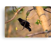 Redwing Black Bird  Canvas Print