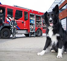 Firefighter Dog by Karen Havenaar